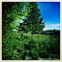 il bosco verde