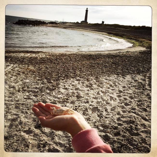 Cose che si trovano sulla spiaggia: un granchio